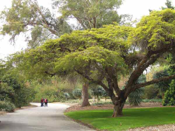 arboretum of la pasadena wedding officiant
