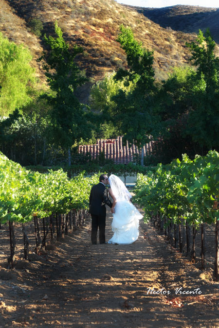 wedding couple kissing in Le Chene vineyard
